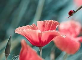 一组唯美花朵高清特写图片欣赏
