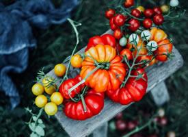 西红柿为什么这么好看又这么好吃
