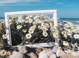 不管生活如何,也能像花儿一样美丽