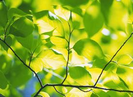 清新绿色树叶高清桌面壁纸