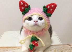 今日份小可爱小猫咪穿可爱衣服图片