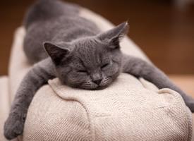 可爱呆萌猫咪睡姿图片欣赏