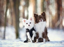 一组温驯嬉闹的狗狗图片观赏
