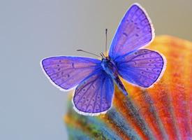 一組炫彩好看的蝴蝶高清圖片