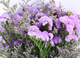 一束唯美的紫色干花特写高清图片