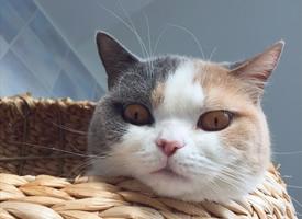 小猫猫直勾勾盯着爬架底下的箱箱