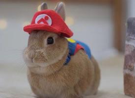 一組可可愛愛的小兔球圖片欣賞