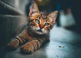 一组森系感的小猫猫图片欣赏