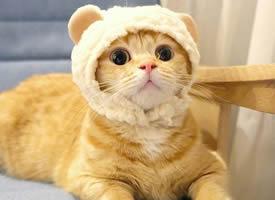 有着圆圆的大眼睛的小猫图片欣赏