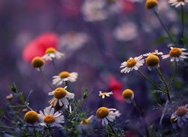 一组唯美意境的鲜花图片欣赏