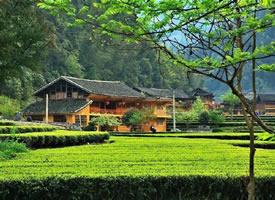 茶海,宛若世外桃源——荆楚第一羌寨的麻柳溪