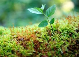 剛剛長出來的綠植清晰壁紙欣賞