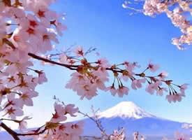 富士山下超唯美的粉色?;ㄍ计郎?><i>       富士山下超唯美的粉      </i></a><a href=