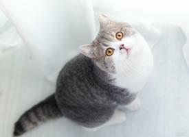一组可爱的小猫肥猫图片