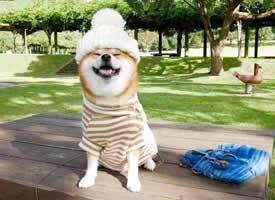 一组穿可爱衣服的爱笑的狗狗图片欣赏