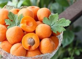 颜色特别好看干净的杏子图片欣赏