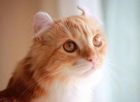 小卷耳Bell,圆圆的眼睛和耳朵,看起来好乖啊 