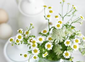 一组小清新花朵静物高清壁纸