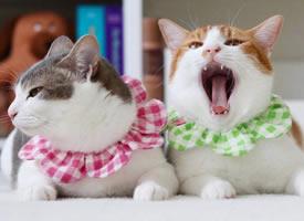 住在岛国的猫咪Amelie和Canele ,每天的日常就是腻在一起
