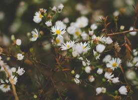 有几种色彩的雏菊图片观赏