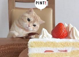 一组超级可爱的猫猫想吃东西图片欣赏