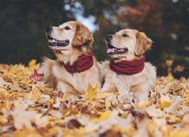 一组超级可爱会卖萌的狗狗图片欣赏