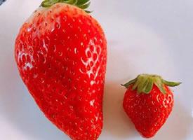 一组超级红色的草莓图片欣赏