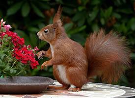 一组机灵可爱的小松鼠图片欣赏