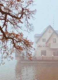 一组大雾笼罩着江畔的朦胧美拍摄图片