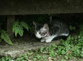 猫咪出去踏青,拍下每张照片都萌到心坎里了