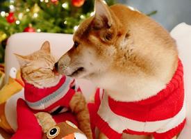 圣诞节狗狗和猫猫的可爱写真图片欣赏