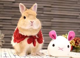 圣誕節了,霓虹國的兔幾mitarashi已經換上了美美的圣誕套裝 ????