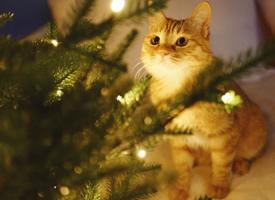 夜晚闪闪的小灯光下的猫猫拍摄图片观赏