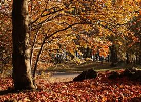 一組秋天遍地金黃的樹林風景圖片
