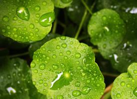 绿色的植物绿叶护眼壁纸图片欣赏