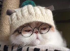 一只睡懒觉不想起床的心爱懒惰小猫图片