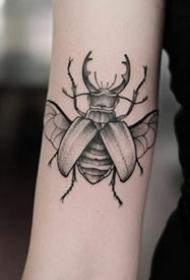 精致的一組小昆蟲紋身圖片