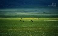 西藏阿里图片_14张