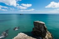 新西兰奥克兰鸟岛风景图片_10张