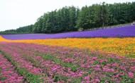 北海道图片_21张