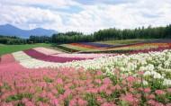 日本北海道风景图片_20张