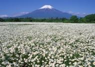日本富士山春天风景图片_12张