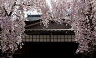 日本宫岛风景图片_16张