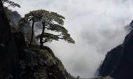 安徽黃山奇松風景圖片_14張