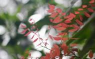 洪湖风景图片_10张