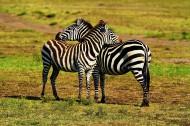 释放的原野:魅力肯尼亚风景图片_20张