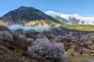 西藏林芝桃花风景图片_13张