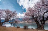 西藏林芝风景图片_11张