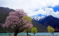 西藏林芝风景图片_16张
