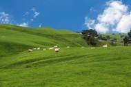新西兰牧场风景图片_8张